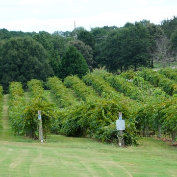 CE VINEYARD